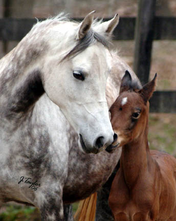 April 2006 - pictured with her filly by Midnight Enchantr