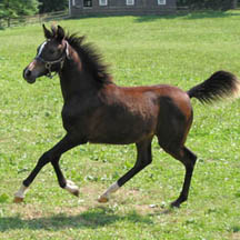 2004 Bay Filly out of Rather Love (by Sakr-TS)