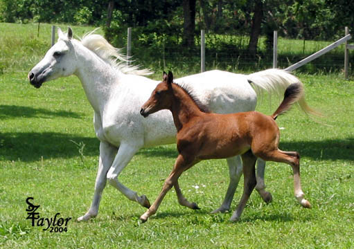 June 2004 with colt by Midnight Enchantr